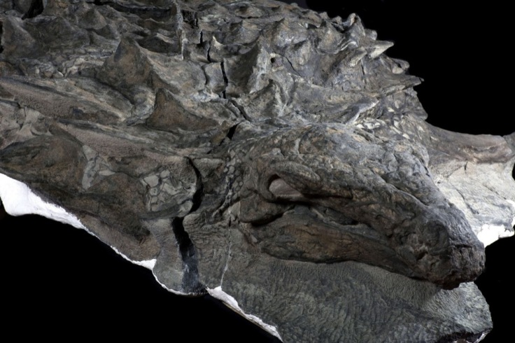 dinosaure-camouflage-predateurs